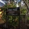 Lone Pine Cottage