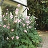 Clarendon Cottages Sassafras