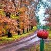 Cedar Glen Farmstay