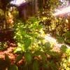 Mayas Native Garden