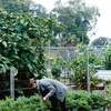 Burnside Organic Farm