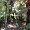 Powered Site NZMCA Camp Saver