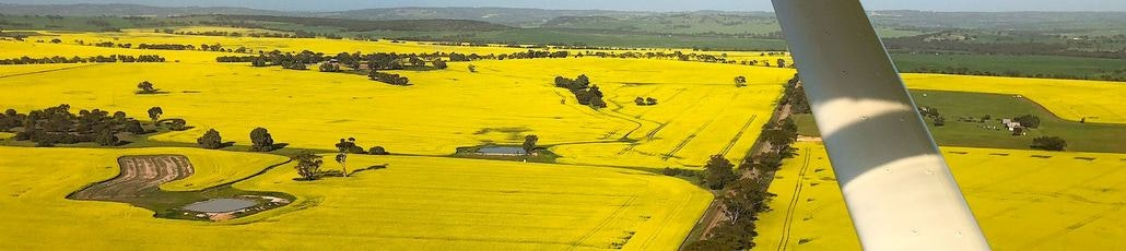 York canola crop from skies