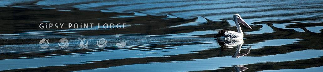 Pelican banner hot