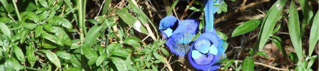 Blue wrenssiteminder